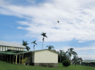 A Monarch butterly flies over Ha'aheo Elementary School